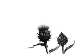 Contra Naturam | Manel Bayo
